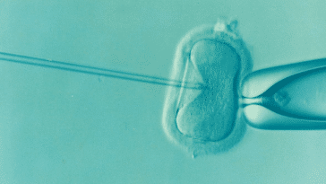 What's Your Policy on IVF?