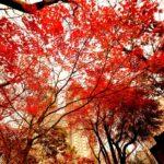 autumnal-leaves-2380617_1920