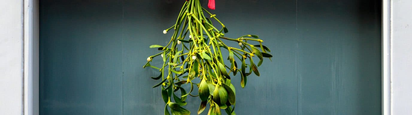 mistletoe hanging above a door